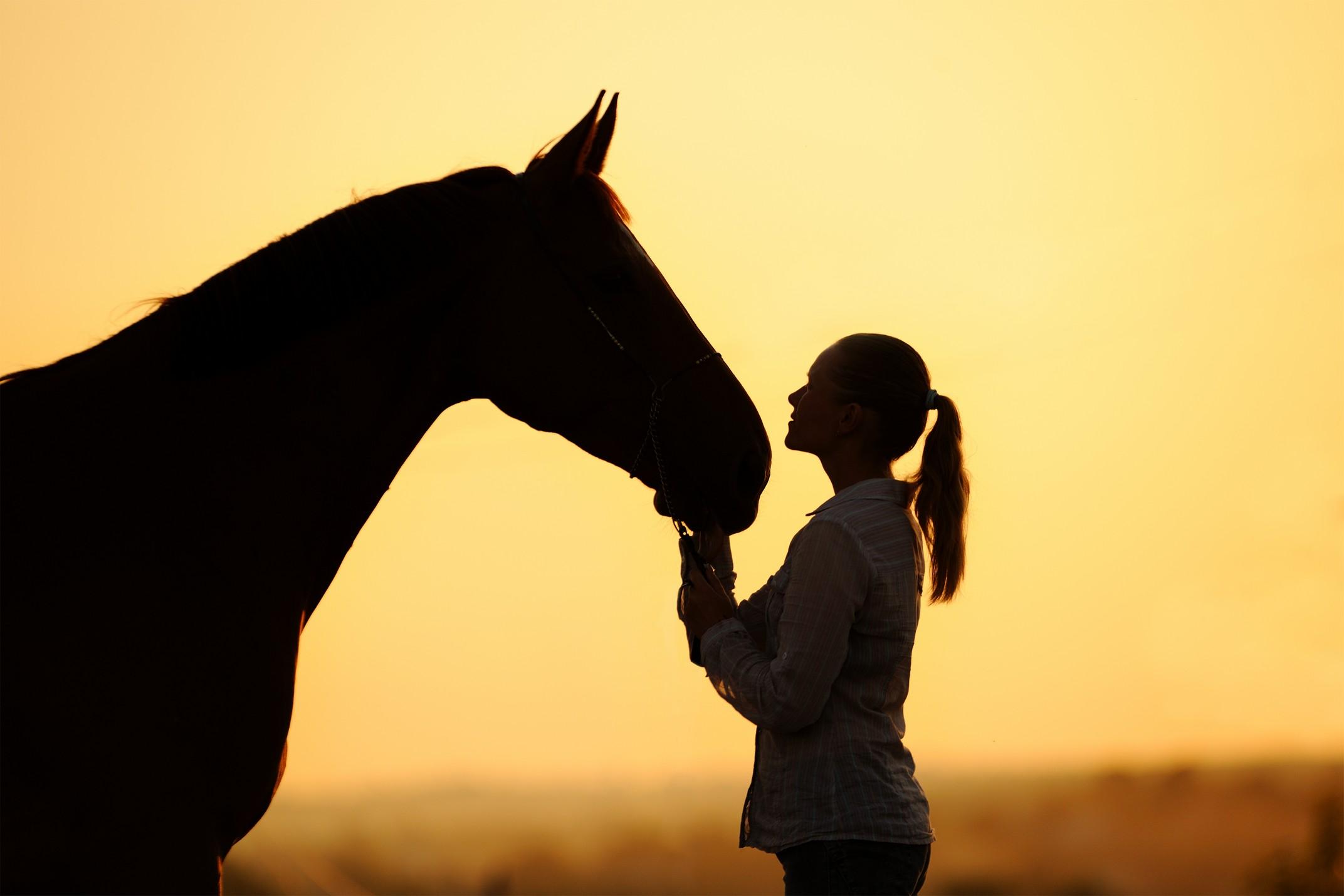 equine services Bay City, TX