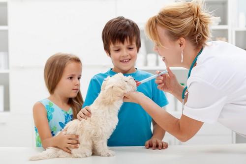 Vaccinations Bay City, TX